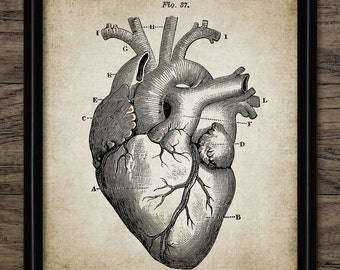 Heart Print - Cardiology Decor - Human Heart Anatomy - Human Biology - Medical Student - Doctor Print - Single Print #344 - INSTANT DOWNLOAD