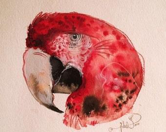 Macaw I, 2016