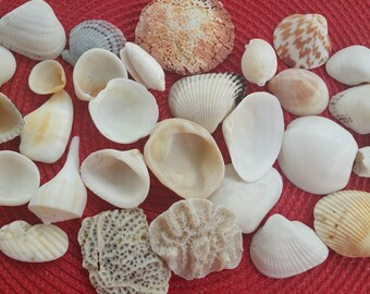 Random Sea Shells, Ocean Shells, Sea Shells Collection
