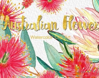 Australian flowers, watercolor clipart, Digital clipart hand drawn. Romantic wedding,  wattle, protea, mimosa red flowers, logo, invitations
