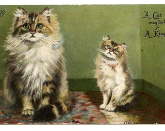 1900s Pretty Tabby Cats Artist Postcard Antique Vintage Victorian Edwardian Persian Kitten