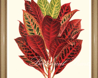 "Codiaeum variegatum Print. Colorful Foliage Print.  5x7"" 8x10"" 11x14"""