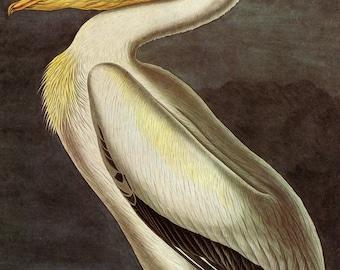 John James Audubon: White Pelican. Fine Art Print/Poster (001146)