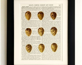 ART PRINT on old antique book page - 9 Eggs, Vintage Upcycled Wall Art Print Encyclopaedia Dictionary Page, Fab Gift!