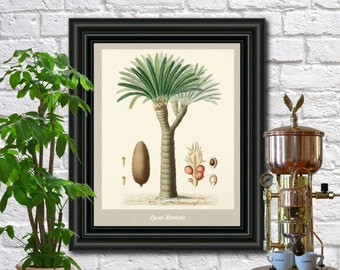 Sago Palm Botanical Print Vintage Sago Palm Illustration Kitchen Wall Art Poster  0471