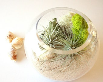 Air Plant Seascape Terrarium