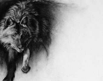 Wolf, charcoal drawing, Giclee print