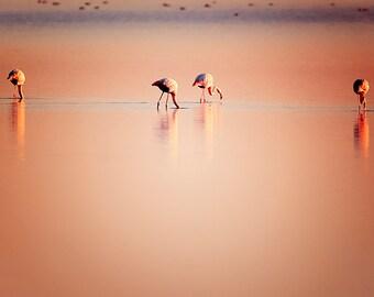 Pink Flamingoes. Fine Art Nature photography, flamingoes photography, flamingo picture, animal photography, romantic wall decor, home decor.