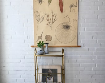 Vintage school map, old map of teaching, micro-organisms illustration, Anatomy original Norstedt & Söner, Stockholm, wall map