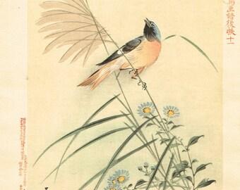 "1894, Japanese Woodblock print, antique, Matsumura Keibun, ""Redstart"""