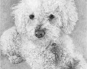 "CUSTOM PET PORTRAIT 8-1/2""x11"" pencil drawing, custom dog portrait, commission, illustration"