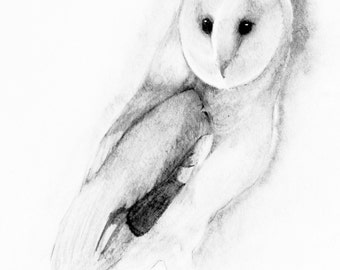 Instant digital download of the original drawing entitled 'Barn Owl' by Thomas Harrison.