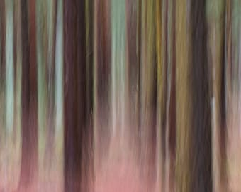 Impression, color, photography,trees, woodland, forrest, abstract, woodland impressions