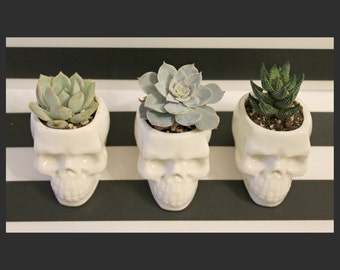 Human Skull Decor, planter desk mini, mini planter pots, small planter gift, planter desk modern, office desk planter, Skull planter