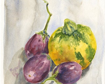 Watercolor Painting: Summer Squash and Japanese Eggplants