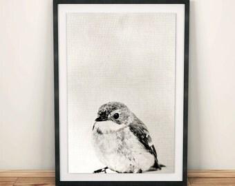 Bird Print, woodland printable, animal prints, bird ornaments, bird decorations, wall decal, nursery decal, honey bird, bird art, bird art