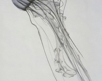 Marker Drawing of Jellyfish - Print 5x7