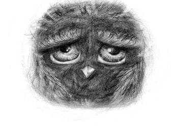 Owl illustration (print)