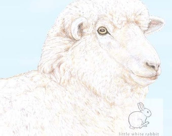 Woolly Sheep Blank Card