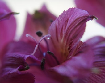 Pink Flower With Raindrop