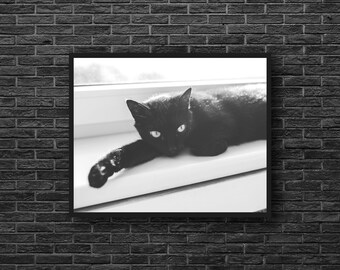 Black Cat Photo - Cat Photo - Kitten Photo - Animal Photo - Paper Photo Print - Black and White - Wall Art - Wall Decor - Living Room Decor