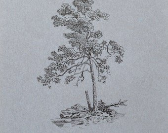 Trees, pen drawings