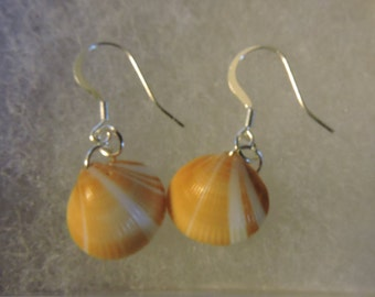 Sterling Silver Shell Earrings, Cruelty Free