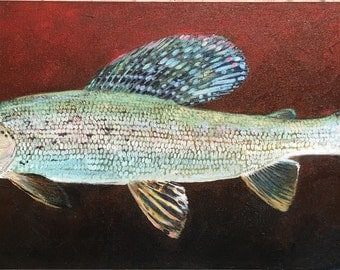 Shimmer Grayling, Giclee Canvas Print, Edition of 10