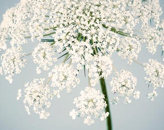 Flower Photography Print, Queen Anne's Lace, Blue, White, Large Wall Art, Fine Art Photograph, Flower Wall Art
