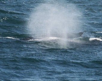 Humback whale spray digital download image free use
