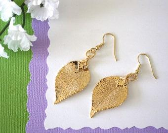 Gold Leaf Earrings, Evergreen Leaf, Real Leaf Earrings, Real Gold Evergreen Leaf, Gold, Nature, LESM140