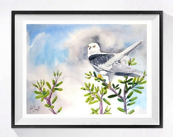 Original Watercolor paintings of birds watercolour White Tail Kite Hawk bird artwork Bird art wildlife painting grey painting - 9 x 12 in