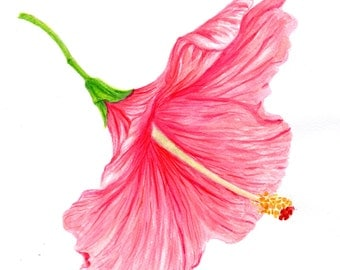"art print of original artwork flower painting  ""A Skirt Like Flower Hibiscus""  watercolor, floral painting, realistic art, A3 print A4, 8x10"