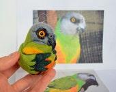 Senegal Parrot, needle felted bird, wool ornament ball