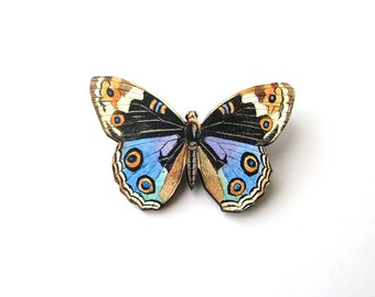 colorful peacock butterfly brooch pin . natural history butterfly collector