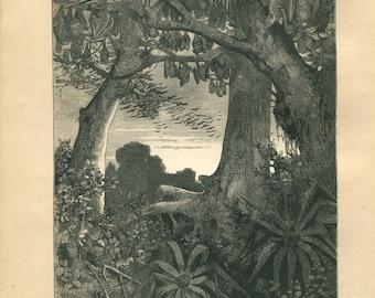 1889 Antique Print Fruit Bats of Ceylon, Black and White Engraving