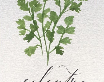 "Cilantro Herb Print- 5""x7"" Watercolor and Calligraphy"