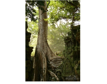 Woodland Photography - Tree - Fine Art Travel Print - Nature 8x12 Signed Art Print - Ta Prohm, Angkor, Cambodia - Serenity