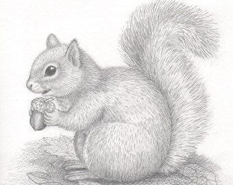 Squirrel drawing Etsy