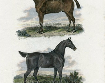 Print of Race Horses, Handcoloured, 1808 Antique Equestrian Engraving of Horses From Rees Cyclopedia, Race Horse and Hunter. Antique print
