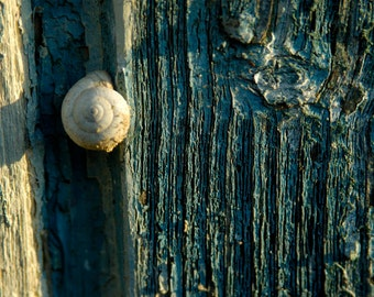 A Nature Print - Snail in a Tree