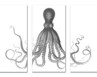 Nautical Octopus Amp Haeckel Wall Art Prints Amp By