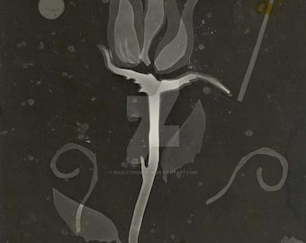 Dark Room Rose