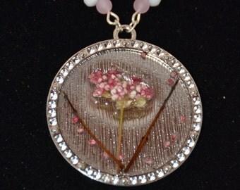 Pink Seedlings