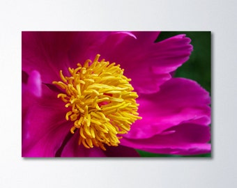 Fine Art Photography, Large Floral Art, Peony Canvas Photography, Large Wall Art, Large Canvas Print, Flower Photography On Canvas