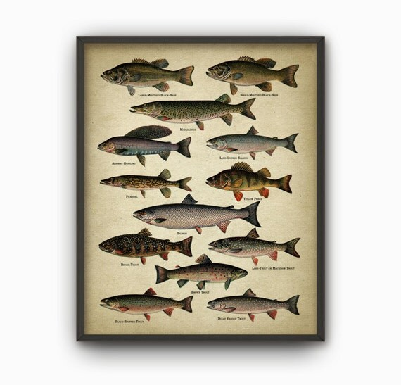 North american game fish print north american lake and for Illinois game and fish