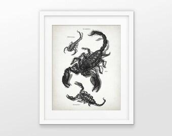 Scorpion Print - Scorpion Illustration - Antique Arachnid Art - Scorpion Poster - Scorpio Zodiac - Single Print #1548 - INSTANT DOWNLOAD