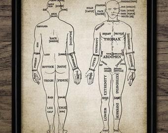 Human Anatomy Print - Human Anatomy Chart - Vintage Human Anatomy Illustration - Printable Art - Single Print #356 - INSTANT DOWNLOAD