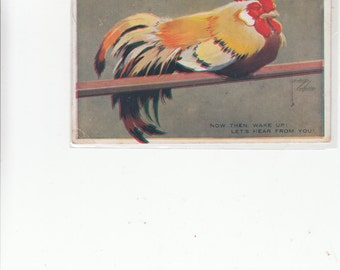 Wonderful Fine Old Rooster Postcard, Asleep On Perch A/S Lawson Wood