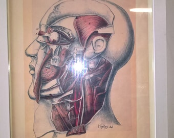 Vintage Anatomical Framed Wall Art Print, Human Body Picture, Scientific Poster, Medical Poster, Head Shot Drawing, Sketch, Phrenology Head